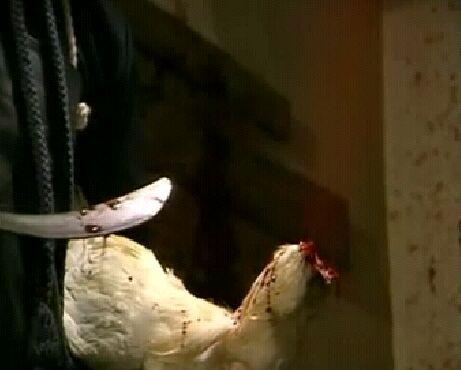 豚鼠血肉之花在线观看