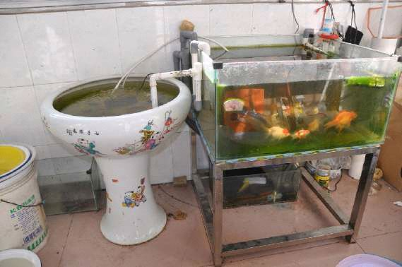 鱼缸吸便器