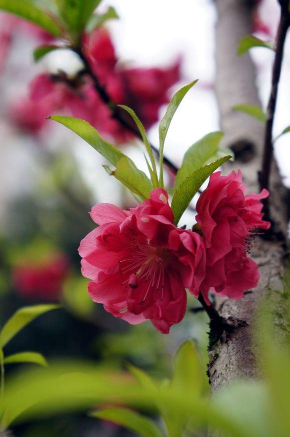 春暖花开论坛手机版