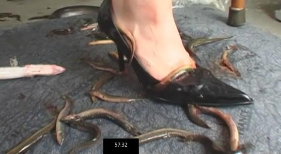 幻奇鳗鱼泥鳅入肛