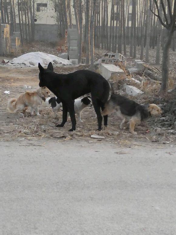 美女与狗狗配种图片