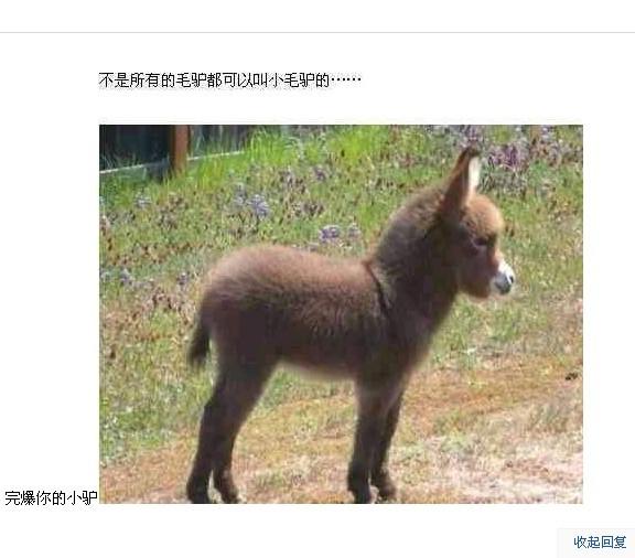 大马配小驴视频