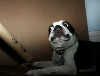 吓坏了的狗表情.图片