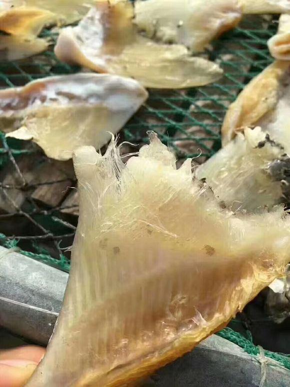 """鲍鱼是海参海味之一,与燕窝,软件和八珍合称为中国四大""""美味""""美食家鱼翅图片"""