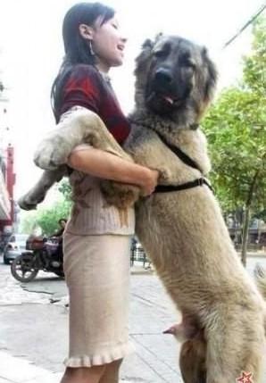 跟狗狗爱爱的感觉