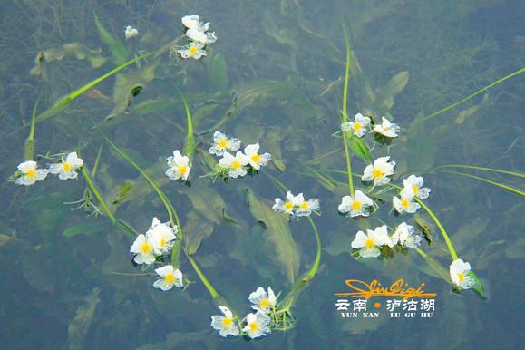 水性杨花的意思_然后湖边溜达,传说中的水性杨花