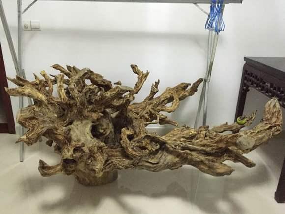 八百斤老树根,价值多少?