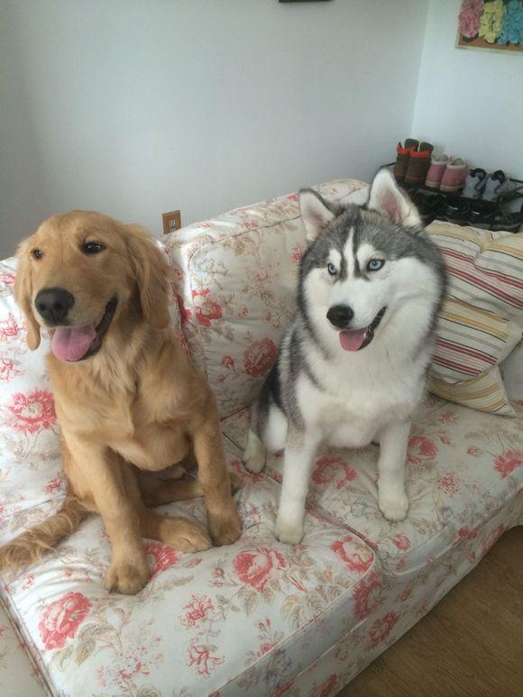 人与交狗配图片图图-那晚我跟我家狗狗做了 那晚我家狗狗把我上了 昨晚我和狗狗做了8次