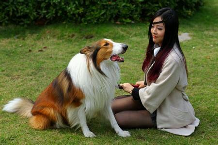 女人和犬直干