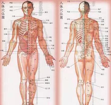 胃在人体的具体哪个位置 有图可以参考吗