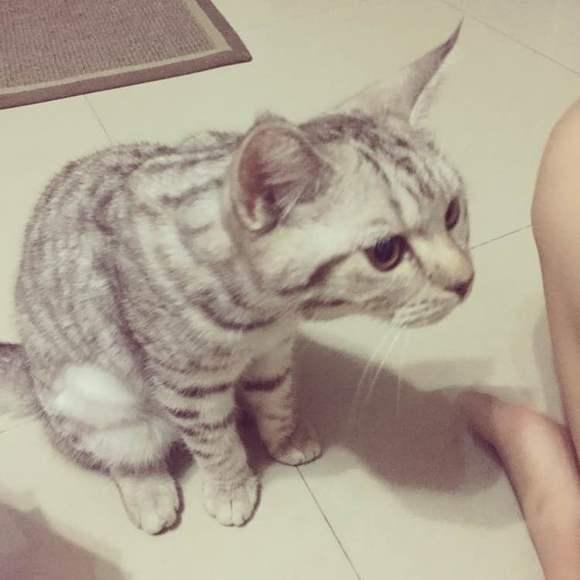 一个喜欢猫的男人_玄烨赫拉闻到像见了鬼一样,可爱莎超级喜欢……发现一只爱吃榴莲的猫