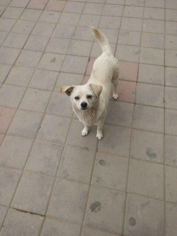 今天出去又碰见昨天的内只小狗,同样在砂锅买火腿肠喂了超市小黄鱼图片