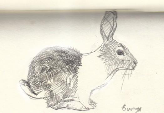 朱迪疯狂动物城素描画图片分享