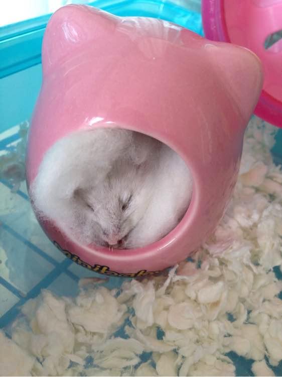 仓鼠突然变瘦了!青蛙王子的洗发沐浴露怎么样图片