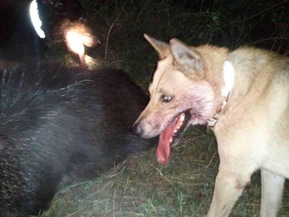 土狼狗和狼狗如何区分