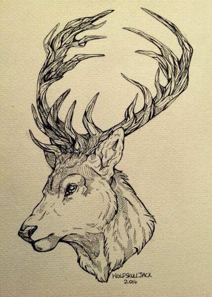 新人想纹身,求麋鹿的手稿.图片