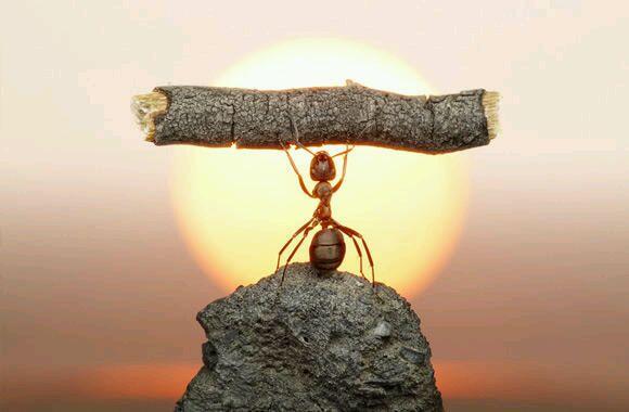 张楚 蚂蚁蚂蚁
