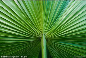 29棵棕榈树在线