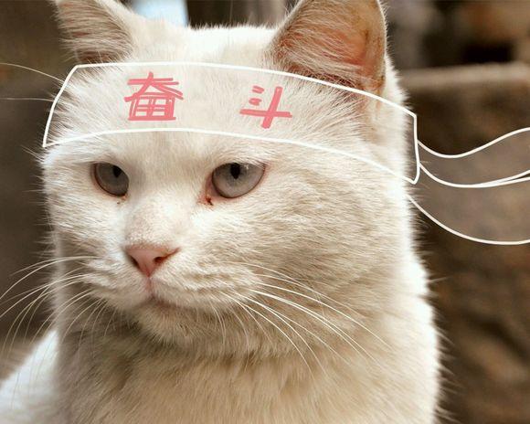 猫表情包加油分享展示图片