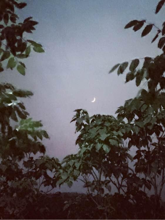 月上回廊新月如钩_新月如钩就是蚊子老多