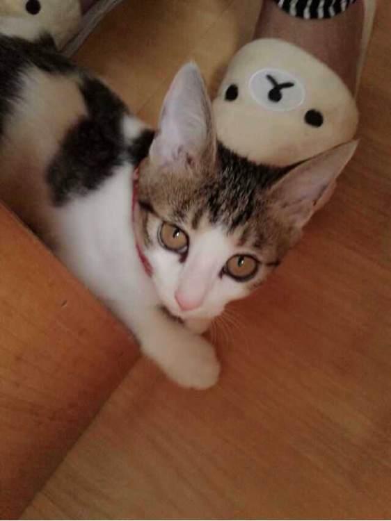 秋裤猫qq表情分享展示图片