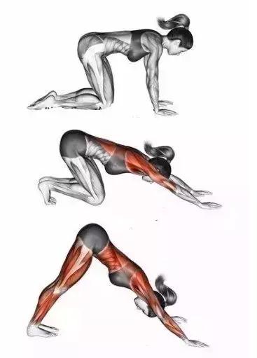 5,下犬式的身体部位力的走向图: a,手臂和肩部力的走向图片