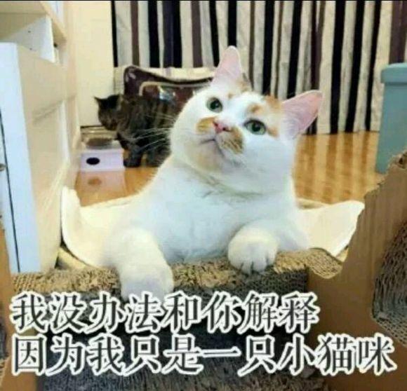 壁纸 动物 狗 狗狗 猫 猫咪 小猫 桌面 580_558图片