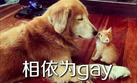 【心系闪神】相依为gay系列图片