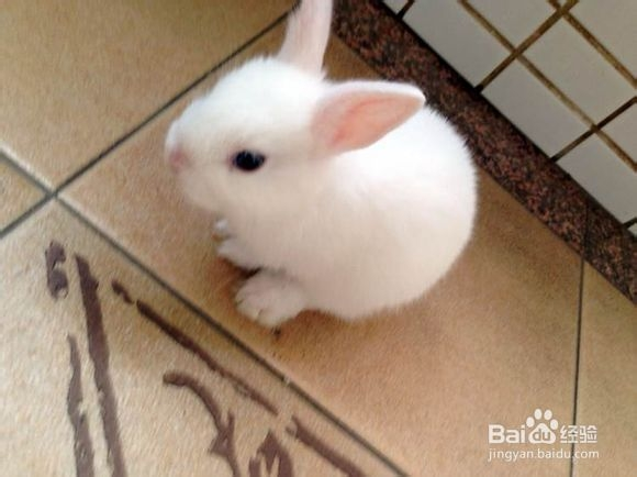 兔子整版动物580_434别惹壁纸完蚂蚁免费图片