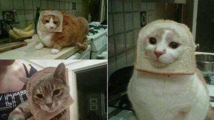面包麻烦给我吃好么 也不要套我脸上好么图片