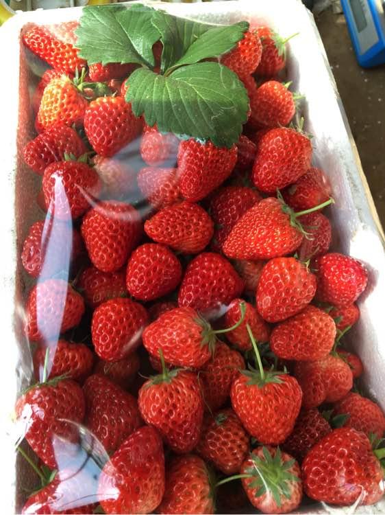 九九草莓.特价25元一箱.预购从速