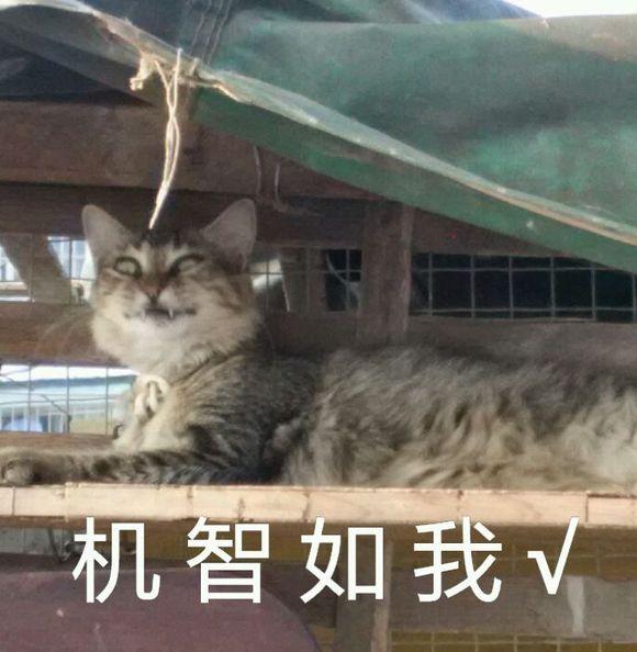 小贱猫表情包图片