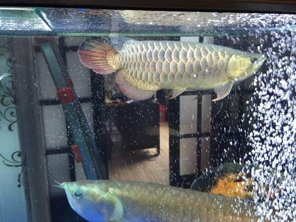 森森1.8鱼缸下水流量如何改大图片