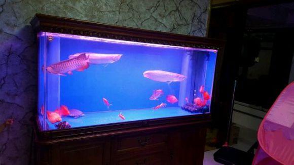 求助,本人才接触龙鱼和底滤鱼缸,买的是森森的两米乘60的图片