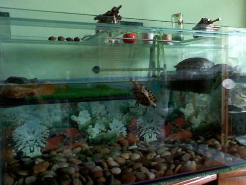 想把原来的乌龟缸改装一下,前几天看到高人的缸很不错!图片