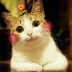 【图片】回复:不应当 因为我是一只小猫咪【表情吧】图片