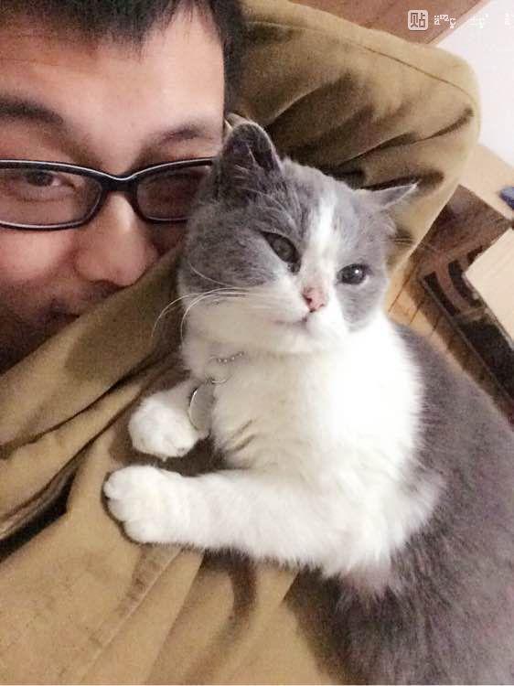两只猫亲亲表情包分享展示图片图片