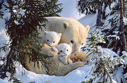 大多数毛茸茸的动物都很萌啊,看了个熊猫的帖子再次迷倒了发绳双胶蝴蝶结怎么系6图片