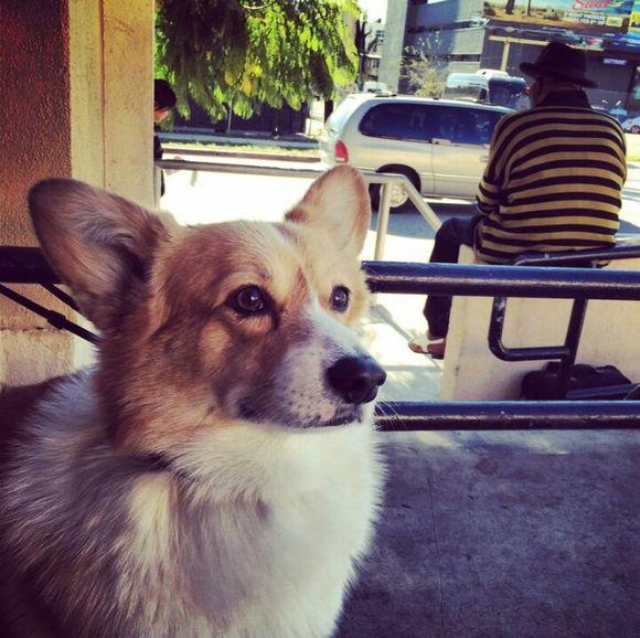廖沙的性格特点_回复:【相册】廖沙的爱犬elvis melvisa