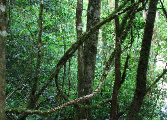 森林原人的详细资料