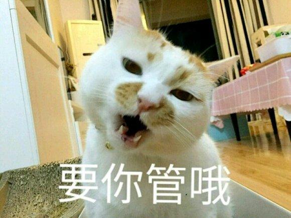求这只猫的表情包图片