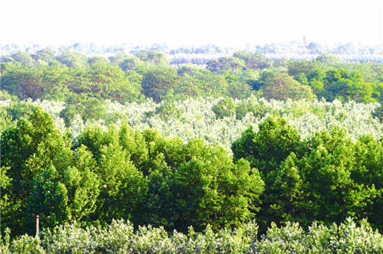 图说:城防防护林带图片