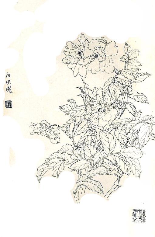 素描一枝白玫瑰的绘画技法图片