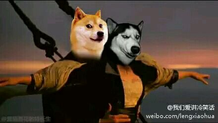 当材犬与哈士奇在一起时发生的事图片