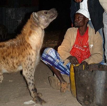 鬣狗和人的对比!