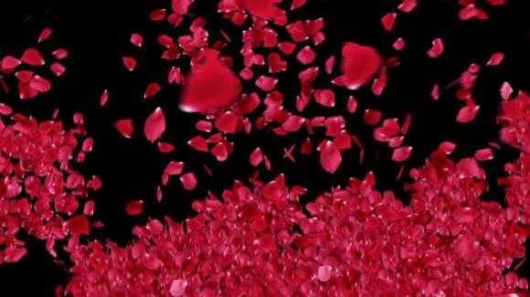 铁血真心:心形聚集的玫瑰花瓣漫天盛放,净化心灵图片