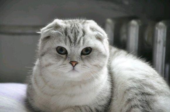 猫的叫声录音
