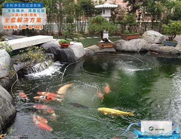 景观鱼池设计图片