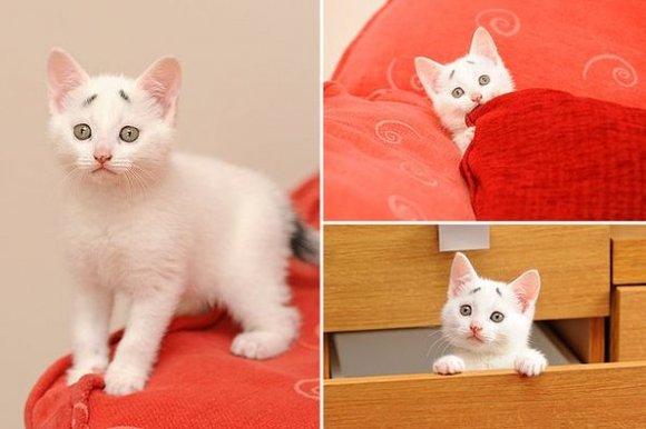 表情 萌猫的各种表情包图片