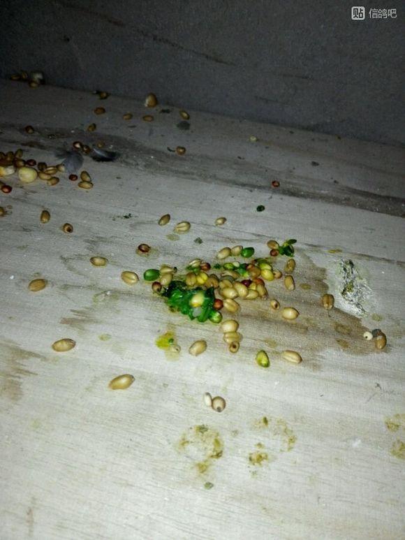 蜗牛鸽子,帮我还有绿色吐大神,看看喇叭的回事.粮食电压你好图片